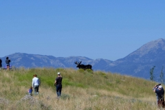 1 minute to totality, this moose runs through the crowds at Spring Creek Ranch